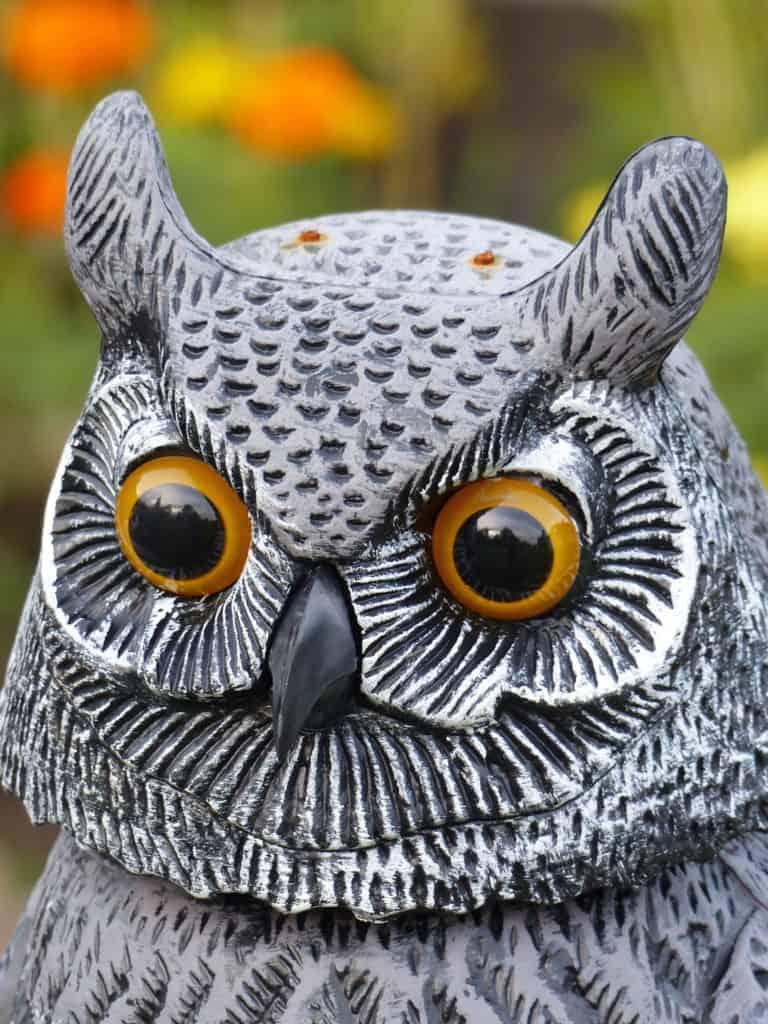 Photo of a bird/owl decoy